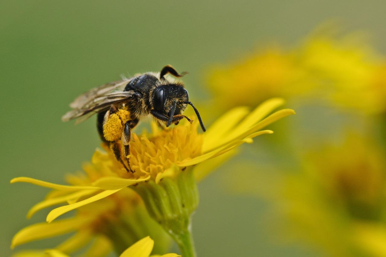 Jak na bodnutí hmyzem bez návštěvy lékárny