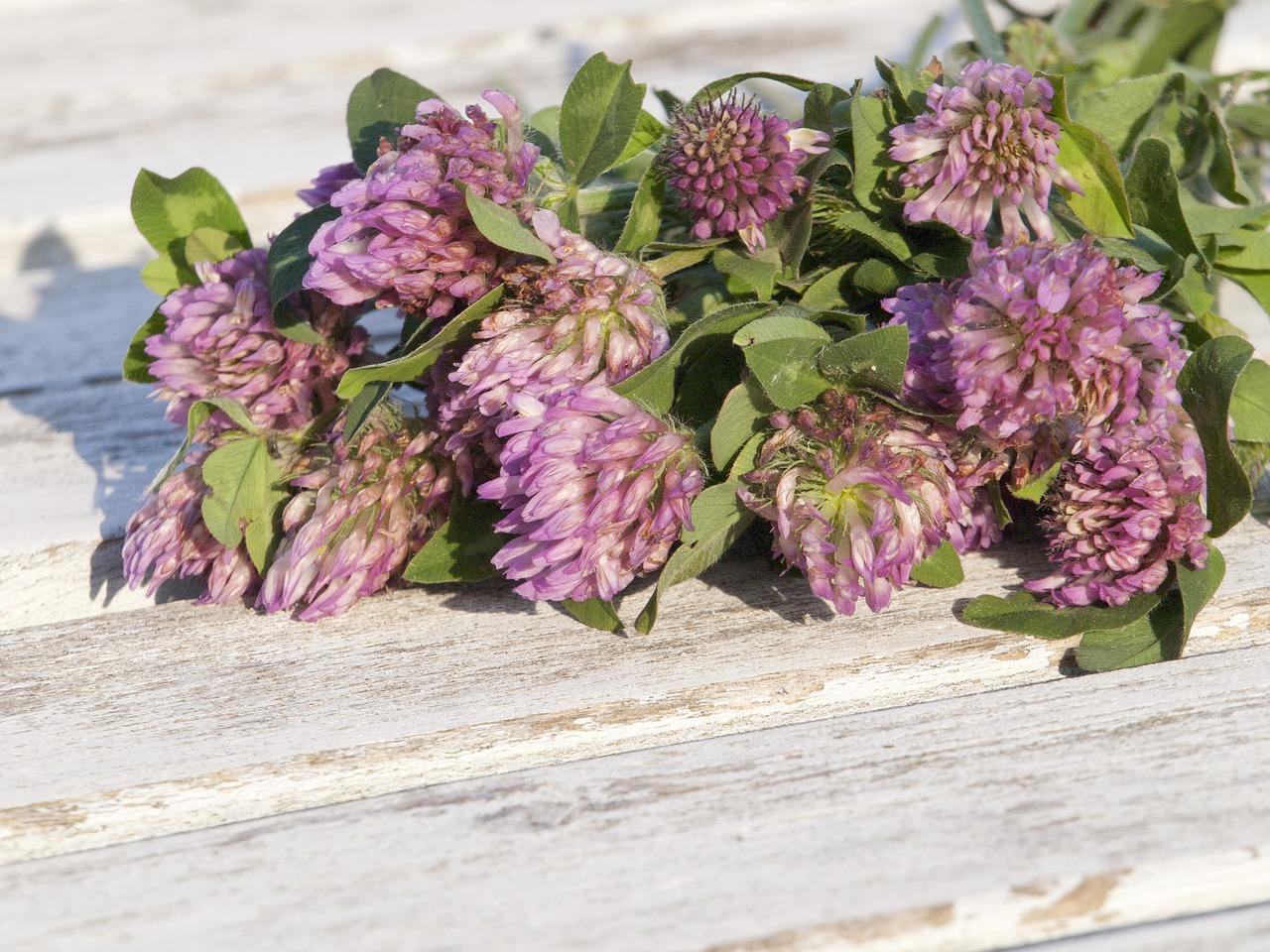 Předčasná menopauza – jaké bylinky vám pomohou?